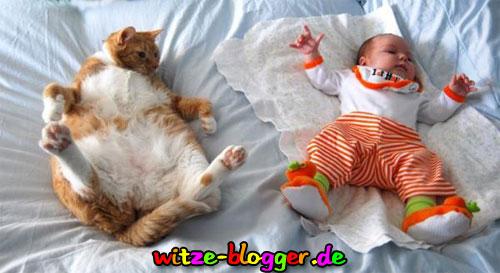 Katze macht Baby nach