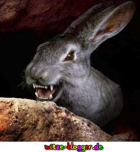 Der Hase aus dem berühmten Film Ritter der Kokosnuss