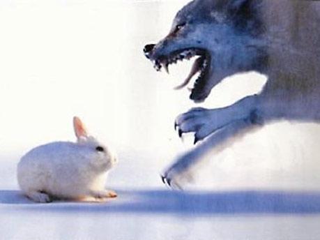 Kleiner süßer Hase - großer gefährlicher Hund 1