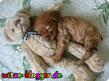 Hund Kuschelt Mit Bär
