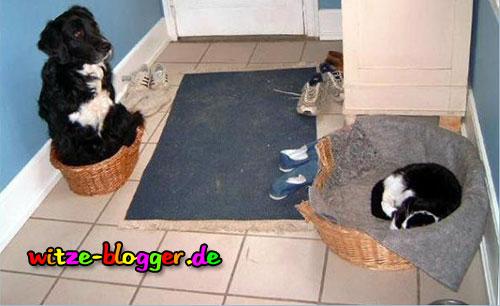 Hund und Katze tauschen Schlafzimmer 😀