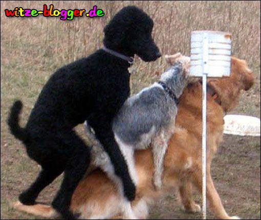 Hundesex