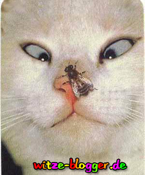 Katze Wespe